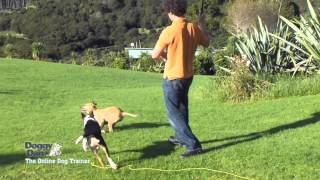 Training A Dog To Fetch
