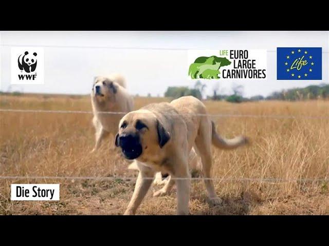 Hunde als Schutz vor Wölfen: Bauer Swen berichtet | WWF die Story