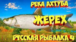 русская рыбалка 4 Жерех река Ахтуба рр4 фарм Алексей Майоров russian fishing 4