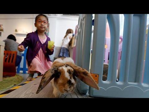 Hong Kong's first 'rabbit café' opens its doors