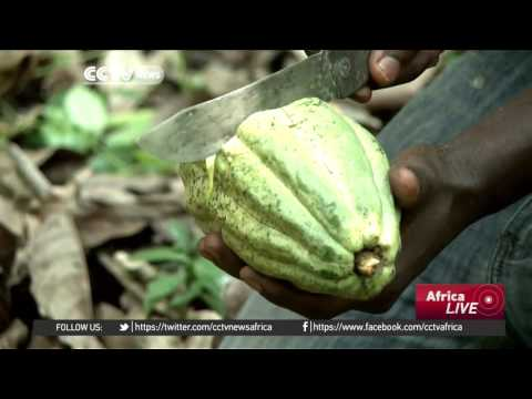 Trade fair in Cameroon aims at encouraging young people to join cocoa farming industry