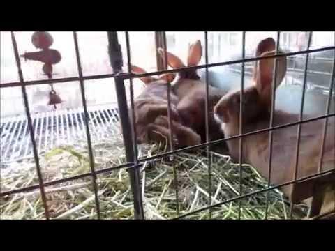 New Zealand Rabbit Kits At 8 Days And 8 Weeks Old