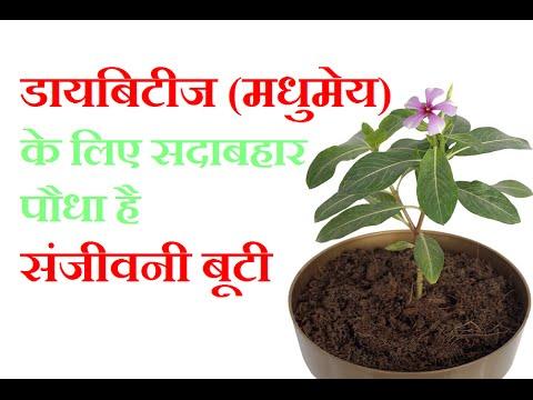 सदाबहार पौधा है