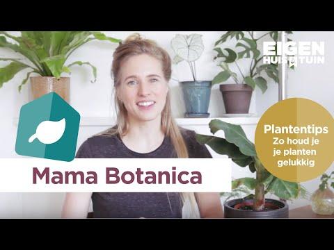 plantentips-van-mama-botanica:-zo-houd-je-je-planten-gelukkig!-|-mamabotanica-|-eigen-huis-&-tuin