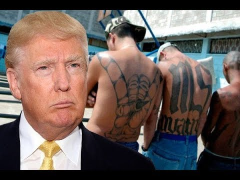 "Did Trump Call MS-13 Or All Undocumented Immigrants ""Animals""?"