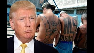 Did Trump Call MS-13 Or All Undocumented Immigrants