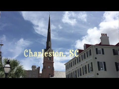 Lovebugs in Charleston, South Carolina