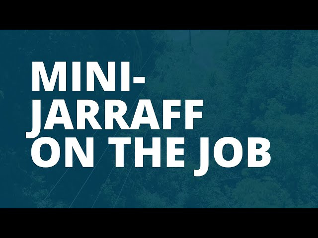 Mini-Jarraff On the Job