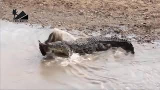 UNEXPECTED Animal attacks-The Best Of Wild Animals Attacks 2019-Most Amazing Moment