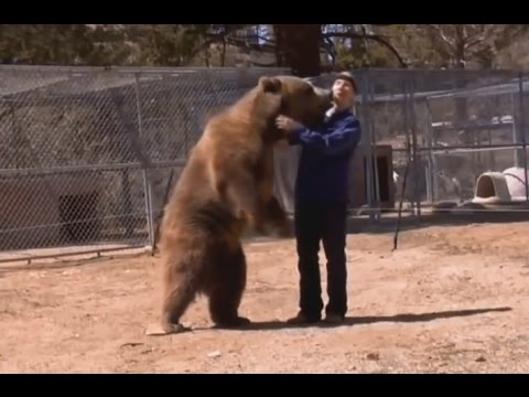 5 Shocking Bear Attacks Caught on Video