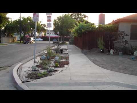 Los Altos Neighbor takes advantage of City of Long Beach new program Lawn To Garden