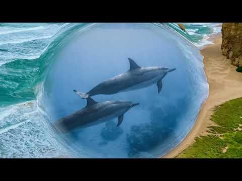 Дельфинотерапия. Исцеляющие звуки