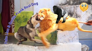 Fake Lion Vs Gorilla Prank Real Dog Try Not To Laugh Challenge Must Watch New Funny Video 2021