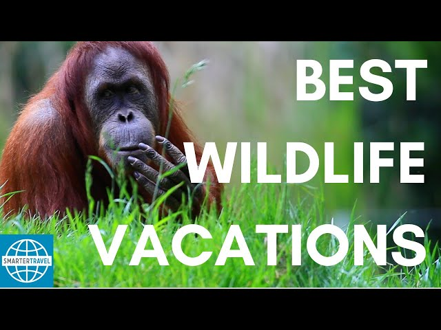 The 5 Best Vacations for Wildlife Lovers | SmarterTravel