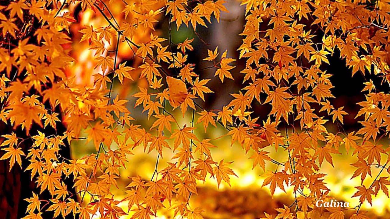 =Осінь красуня= 🍁Цей листопад!🍁= - YouTube
