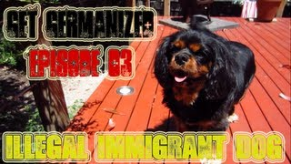 Illegal Immigrant Dog | Get Germanized Vlogs | Episode 03