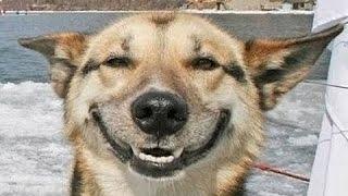 Смешные улыбающиеся  собаки. Сборник [HD]