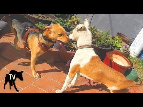 Feeding a stray dog who followed us home | Baja Dog Vlog