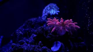 homepage tile video photo for 20G Nano Reef Tank