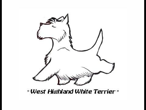 Inno - West Highland White Terrier