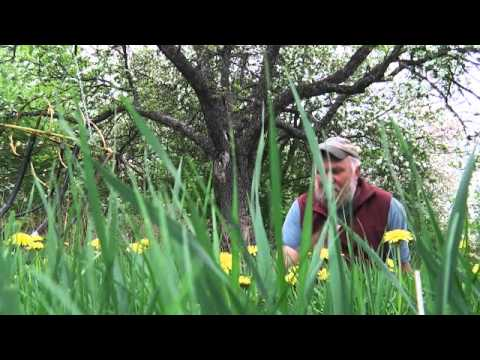 Holistic Orchard Disease Management with Michael Phillips