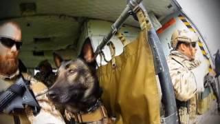Работа американских морских котиков и  собак К 9 US Military Working Dog demo trainig  Navy SEAL & K