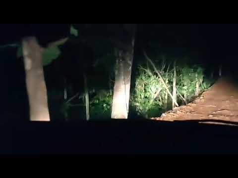 கேரளாவில் காட்டு வழியில் மொபைல் போனில் பதிந்த அமானுஷ்ய காட்சி
