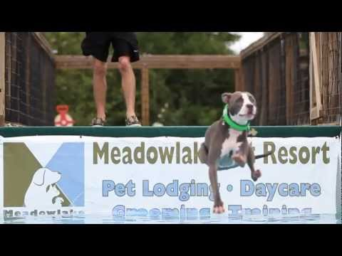 Dogs Dock Jumping in Slow Motion