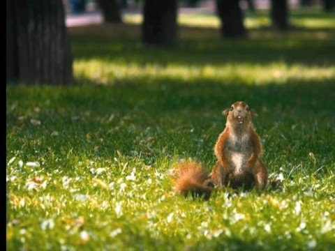 Crazy Squirrel Snickers Commercial Youtube