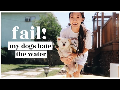 fail!-our-dogs-hate-the-water-|-wahlietv-ep694