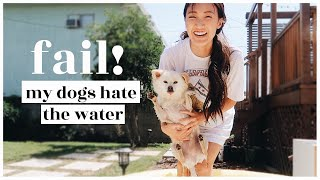 fail-our-dogs-hate-the-water-wahlietv-ep694