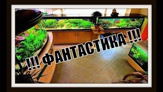 Аквариум с растениями. Красивый аквариум