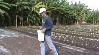 Ladybug Daylilies: Fall Planting 2009 Part 1/2