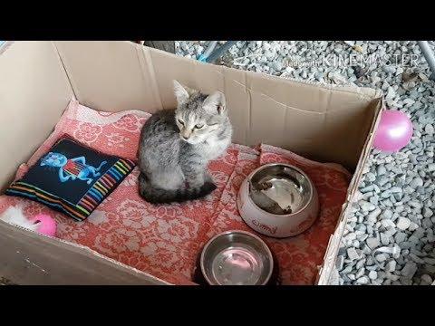 Вопрос: Как ухаживать за котом в гипсе задних конечностей (см)?