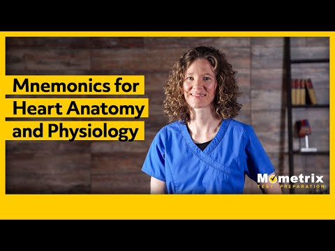 BEST Mnemonics for Heart Anatomy and Physiology
