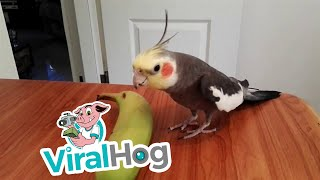 bird-sings-if-you-re-happy-and-you-know-it-viralhog
