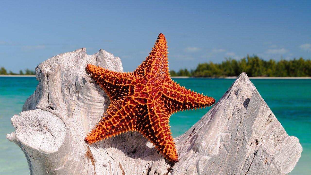 3d Fish Hd Live Wallpaper Starfish Morske Zvezde Youtube