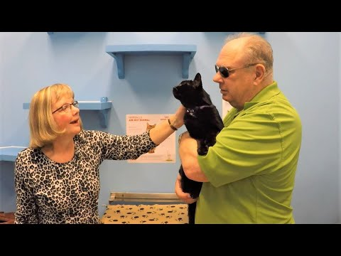 Hero veteran police officer's emotional reunion with lost cat