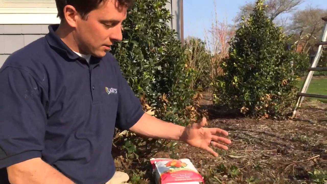 Barlow\'s TV [Episode 49] Pruning Rose Bushes in the Spring - YouTube