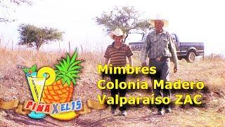 MIMBRES Y COLONIA FRANCISCO I. MADERO Valparaíso Zacatecas. 2014