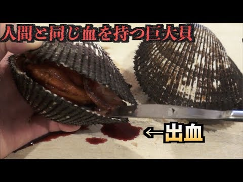 人間と同じ血を持つ巨大貝をさばいたら大量の血が出てきた。。。