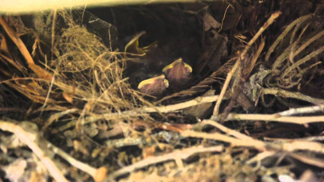 Baby Bird's Poop come in a sack for easy clean up - YouTube