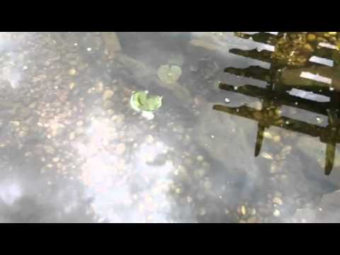How much should i feed my koi fish and how often youtube for How often to feed fish