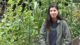 How to Grow Cucumbers in a Circle : Cucumber Gardening