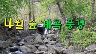 4월 숲 계곡 풍경, …