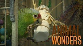 Parrots Love Toys