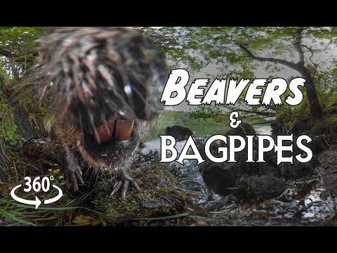 Beavers and Bagpipes 360°
