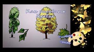 рисуем деревья(береза и клен)