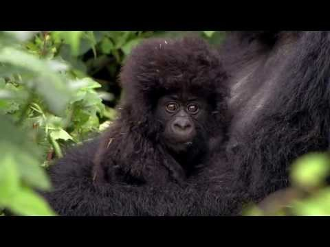 Virunga: The quest to protect Africa's oldest national park