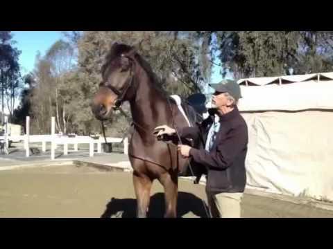 Работа с лошадьми, работа с животными